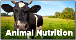 animalnutrition-small.png